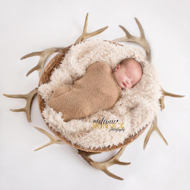 Melanie Runsick Photography baby deer